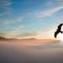 Lintuperspektiivejä ja käsittämättömiä kompromisseja